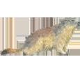 Imagen Marmota
