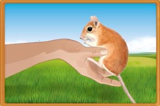 Hágase cargo de los roedores que pertenecen a los otros criadores en tu club de aficionados y desarrolle tus capacidades al máximo.